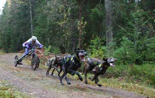 Andrej Drabik - DR4 - kategória 4 psov, leadry Lara x Coby - Šterk